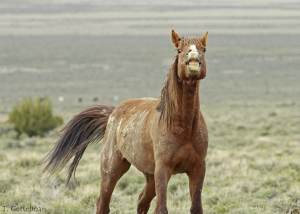 Grinning horse